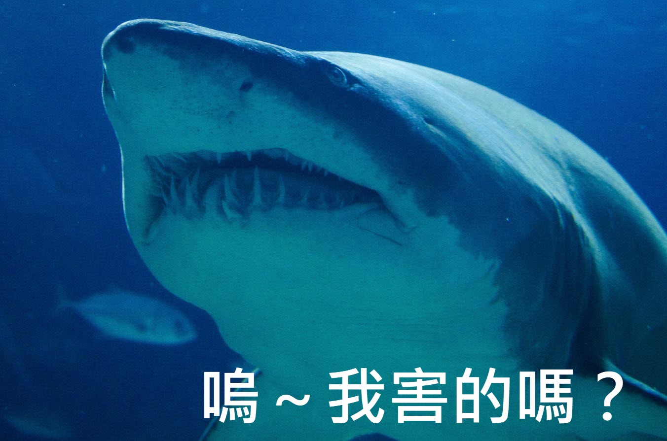 鯊魚與海纜